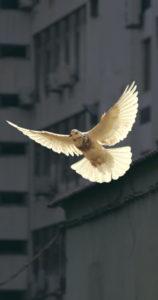 cooperans-dove-governance
